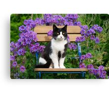Tuxedo cat sitting on a garden chair Canvas Print