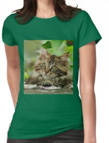 A cutie Maine Coon kitten watching Womens Fitted T-Shirt