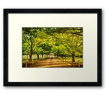 Up the Garden Path Framed Print