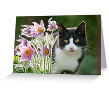 Cat looking through pasque flowers Greeting Card