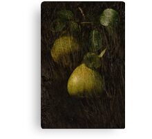 Perfect Pears Canvas Print