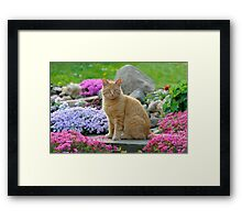 Ginger Garden Cat Framed Print