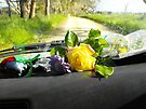Sunday drive gathering flowers by Matthew Walmsley-Sims