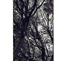 Bower Photographic Print