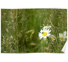 Fly On A Daisy Flower Photograph Poster