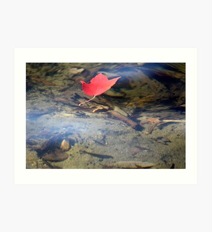 Leaf on the Pond Art Print