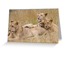 Lion Pride Reunion Greeting Card