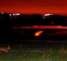 Feeling Foxy by Salien