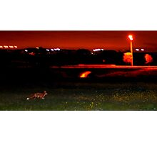 Feeling Foxy Photographic Print