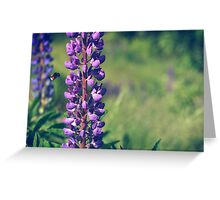 Bumble Bee Flying Towards Purple Plant Greeting Card