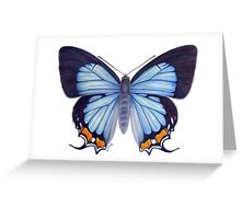 Imperial Blue Butterfly Greeting Card