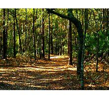 Orangedale Path Photographic Print