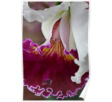 Orchid Ruffle Poster