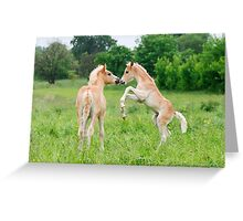 Haflinger foals playing Greeting Card