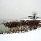 Cooooooooold Snowy Day . . . by PattyB46