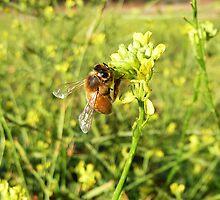Morning Bee by Selene Samuelsson