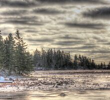 Winter in the Marsh by Debbie  Roberts