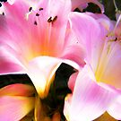 pink lillies by Peta Hurley-Hill