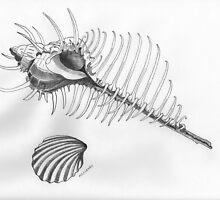 Murex troscheli - Venus' comb by Tom McCleary