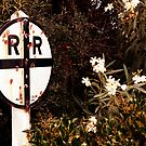 White Flowers Crossing - Perris, CA by Larry3