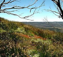 Grasses of Mt Blue Rag by Joe Mortelliti