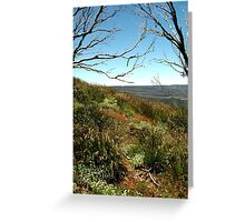 Grasses of Mt Blue Rag Greeting Card