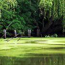 Smith Park - Pughs Lagoon... Richmond NSW by JennyMac