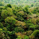 Tree Canopy, Taroka Gorge by Digby