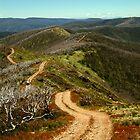 Razor Back Drive,Mt Blue Rag by Joe Mortelliti