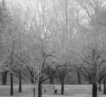 Foggy Day. B&W photo of naked winter trees. Sticker