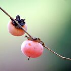 Persimmons by Lisa G. Putman