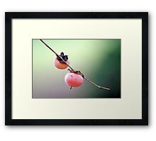 Persimmons Framed Print