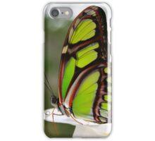 Siproeta stelenes - Malachite Butterfly iPhone Case/Skin