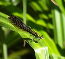 Green Dragonfly by LoneAngel