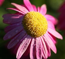 The Curious Case of the ConeFlower by StonePics