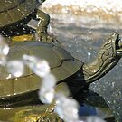 Turtle Fountain Detail by shutterbug2010