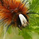cute caterpillar  by gaylene