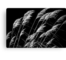 Who Has Seen The Wind Canvas Print