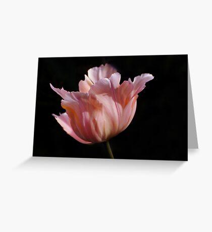 peach tulip Greeting Card