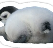 Emperor penguin chick lying down, rear view Sticker