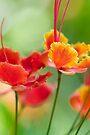 Monet's Garden by Renee Hubbard Fine Art Photography