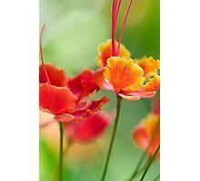 Monet's Garden Photographic Print