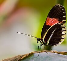 Butterfly resting by Ray Clarke