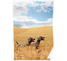 Wheat Wonderland Poster