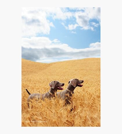 Wheat Wonderland Photographic Print