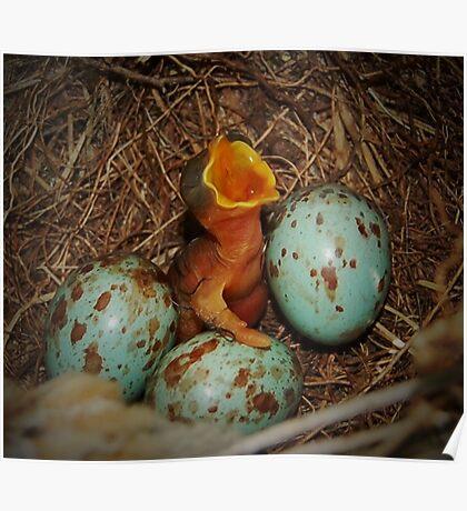 New Born Mockingbird Poster