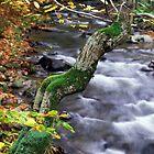 autumn poem by Alexandr Zadiraka