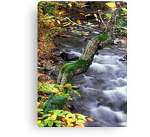 autumn poem Canvas Print