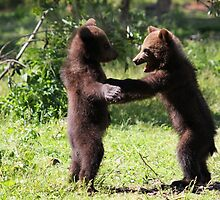 Twin Baby Bears by Jo Nijenhuis