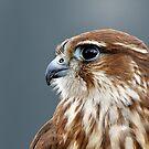 Merlin portrait by buttonpresser